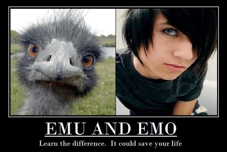 Emu dan Emo~~