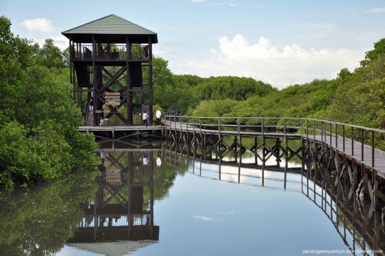 Kawasan Wisata Mangrove