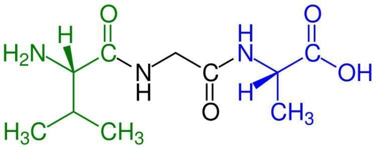 Tripeptide