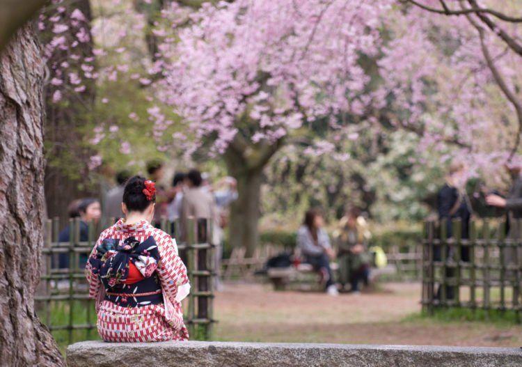 Wanita berkimono di bawah pohon sakura.