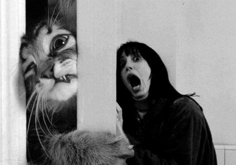 atut kucing :(((