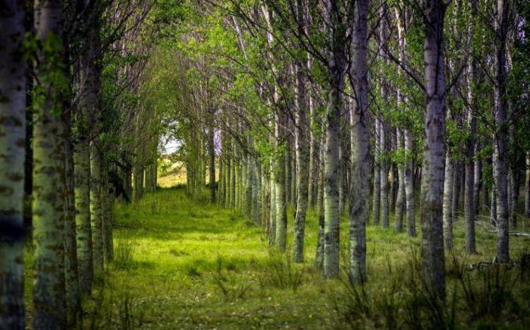 takut sama kayu atau hutan