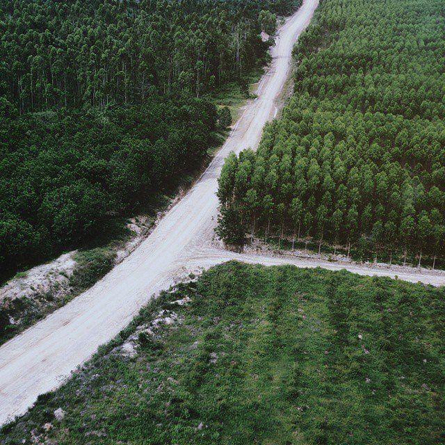 Distrik dengan hutan