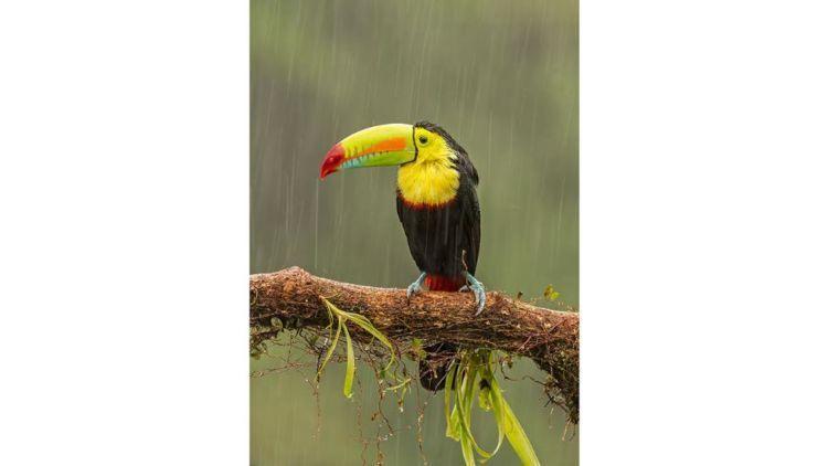 Burungnya kehujanan... :'(