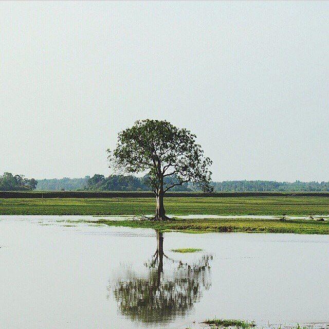 Desa Rambutan