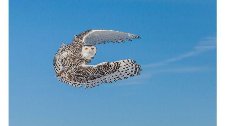 Burungnya terbang bebas!