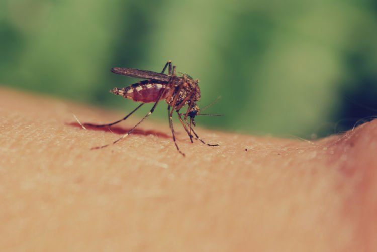 luka gigitan nyamuk