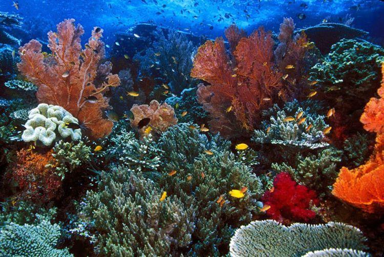 terumbu karang indah begini dirusak, kok ya tega~