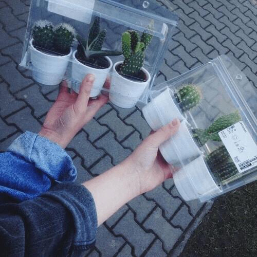 Beli kaktus dulu deh sekarang