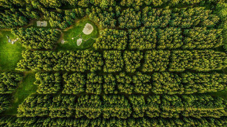 kaya hutan, padahal taman bermain lho