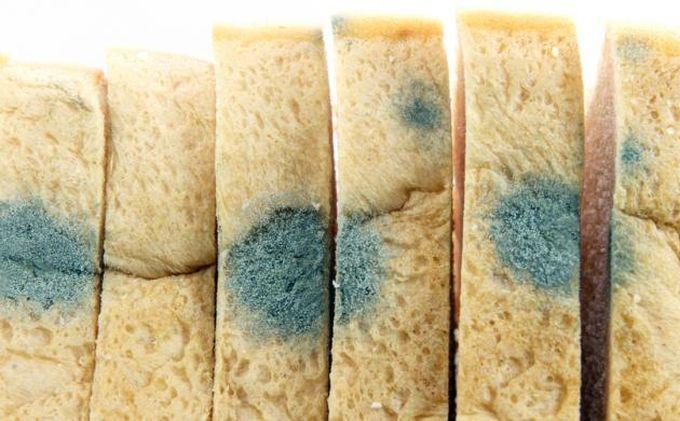 roti tawar berjamur