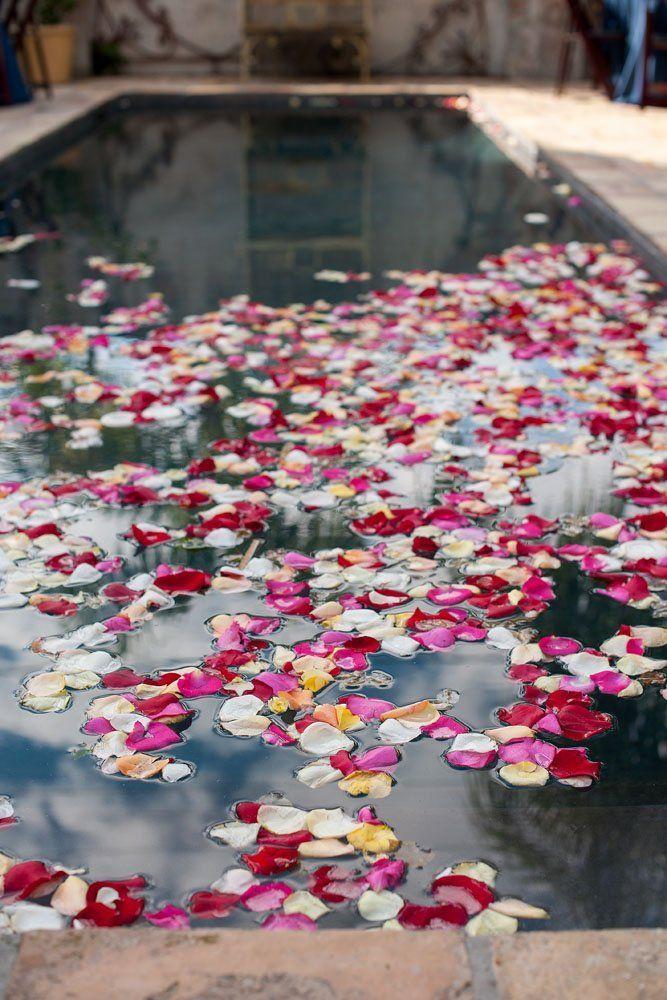 sebaran kelopak bunga mawar