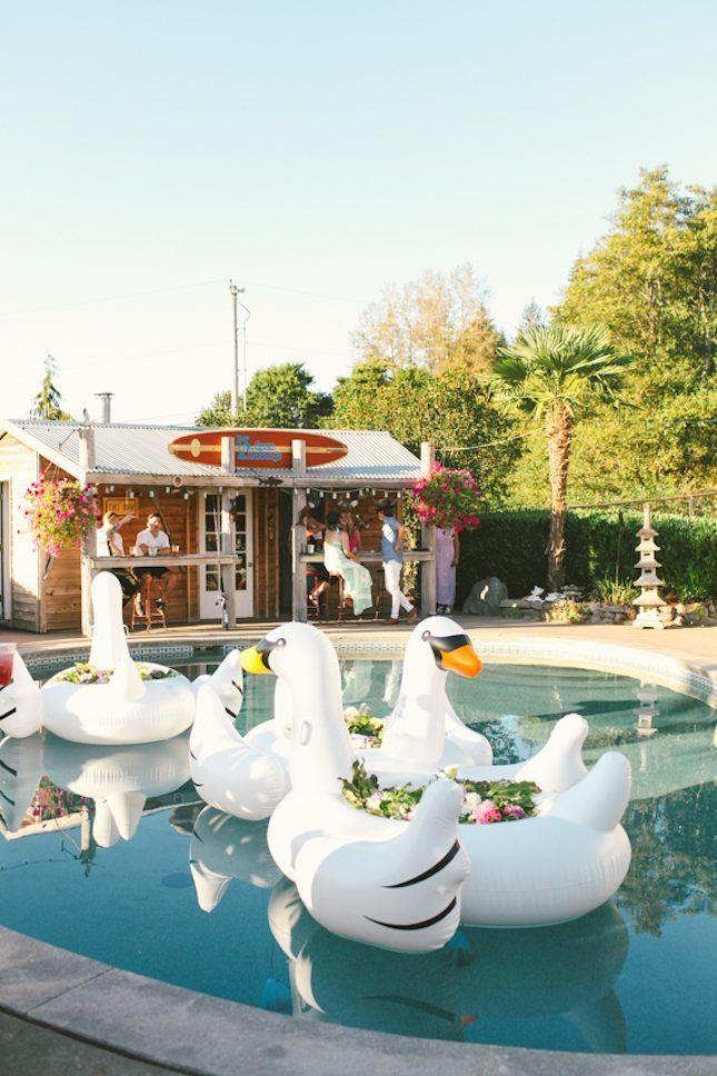 playfull swan