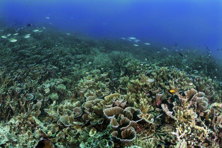 sebagian besar wilayah Indonesia itu perairan. kalau biota bawah lautnya rusak, apa yang bisa dibanggakan?
