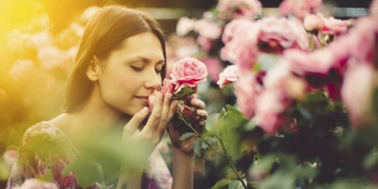 Wanginya mawar emang dahsyat