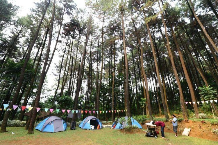 camping di tengah hutan pinus