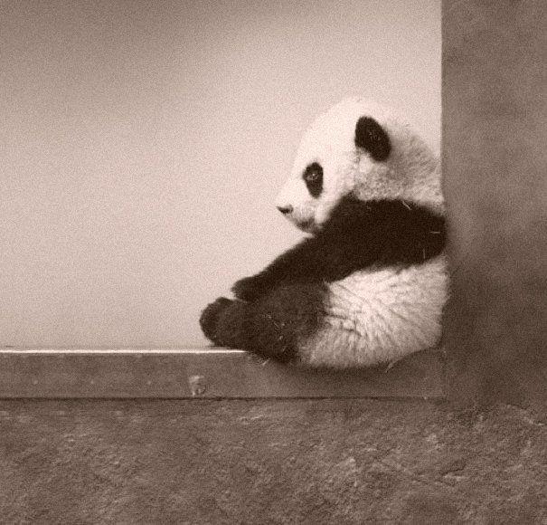 Boneka milik Uci itu 'katanya' berbentuk panda