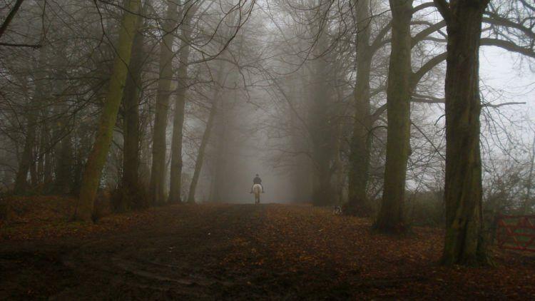 8 Hutan Ini Bakal Bikin Kamu Merinding. Bukan Cuma Cerita Seram Saja, Tapi Juga Suasananya!