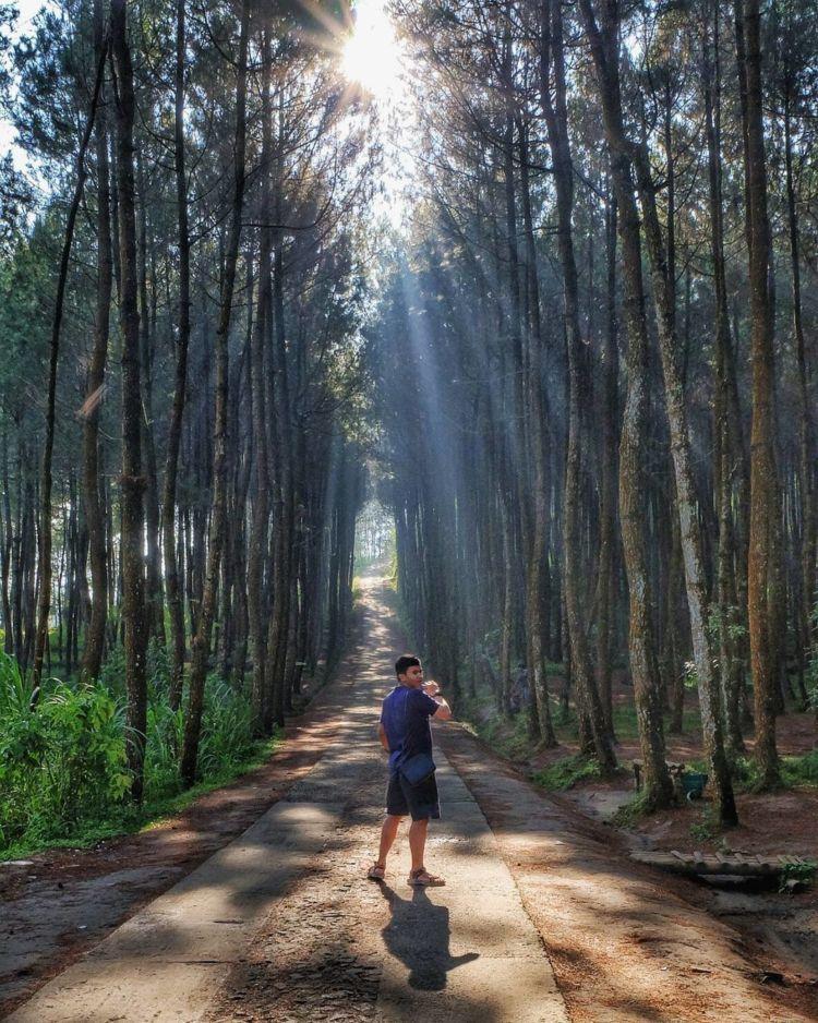 cahaya matahari menerobos pepohonan via @dendyharun
