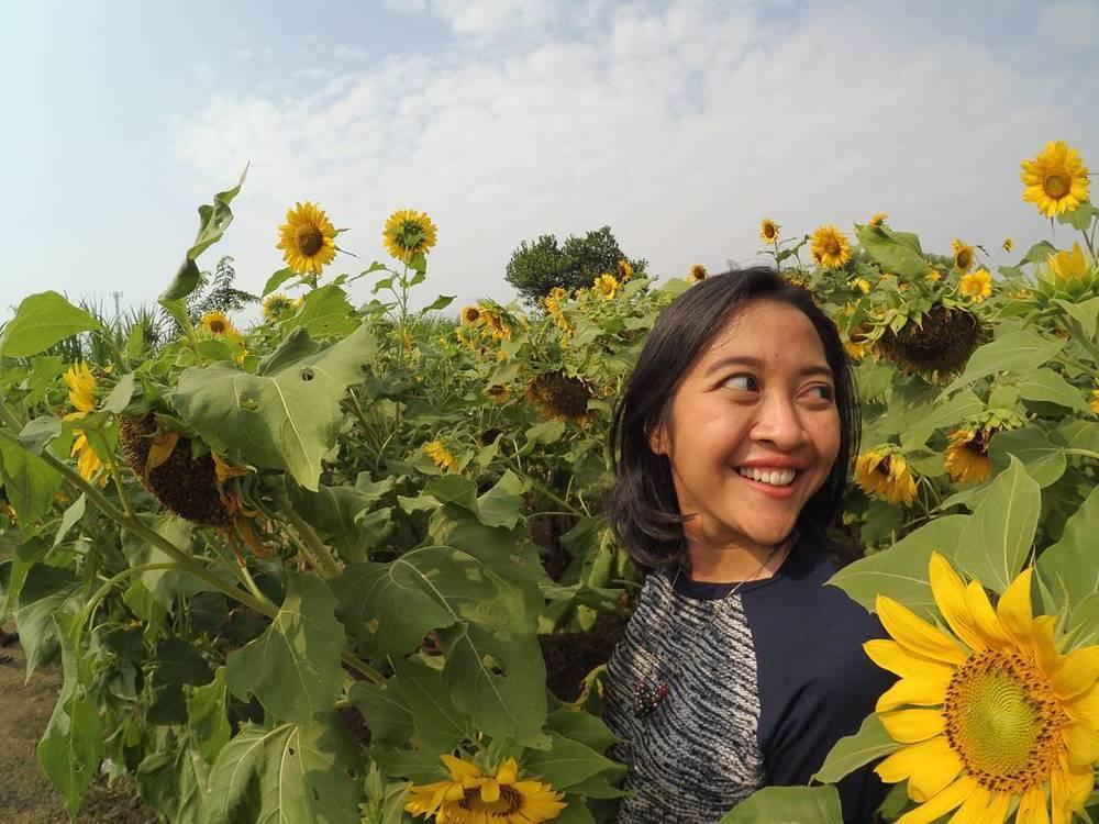 Taman bunga matahari Kediri