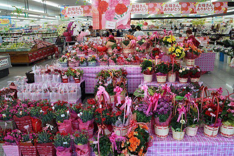 Bunga Anyelir jadi favorit di Jepang