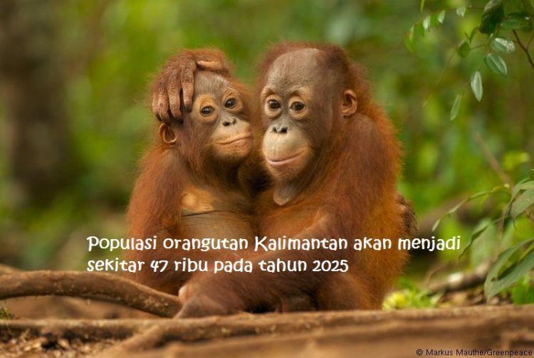 Hutan-hutan di Indonesia dan Malaysia diprediksi akan menghilang dalam waktu 20 tahun ke depan