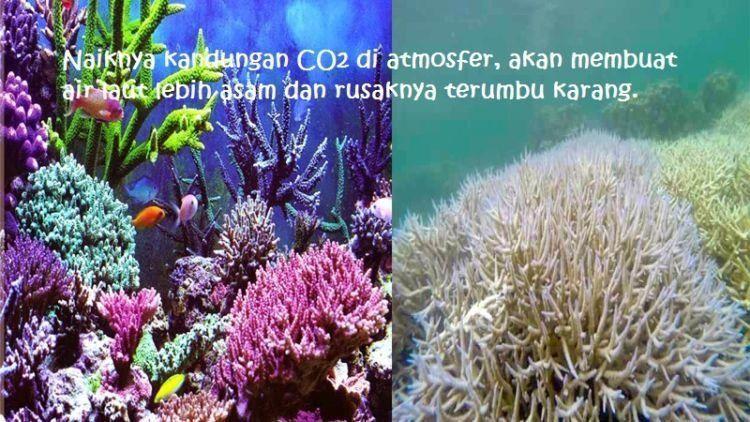 kalau kamu mau, kamu bisa meminimalkan pemakaian plastik untuk mengurangi kandungan CO2 yang naik ke atmosfer
