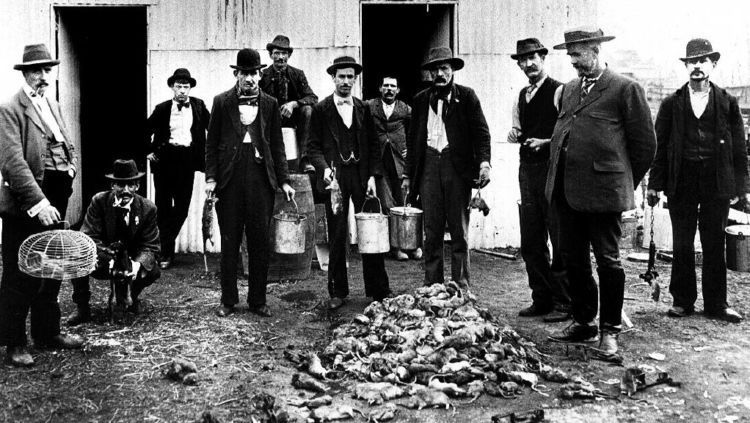Wabah hitam di tahun 1900an