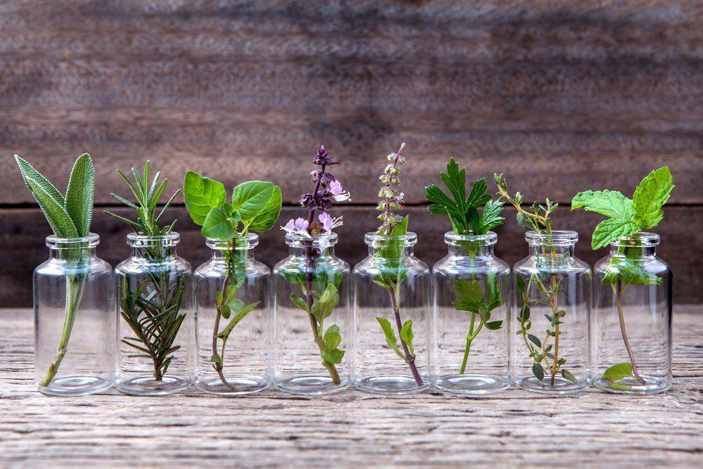 hipwee Herba - Jenis Bunga Yang Hidup Di Air