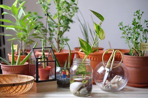 hipwee Money plant 2 - Jenis Bunga Yang Hidup Di Air