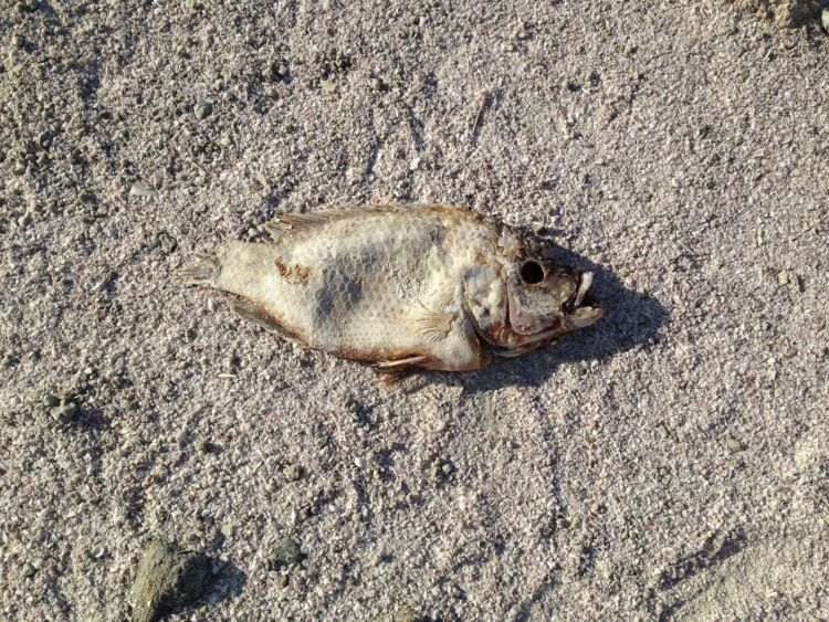 Ikan ini meninggal karena ledakan yang digunakan