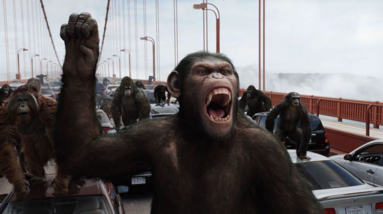 Primata memberontak!