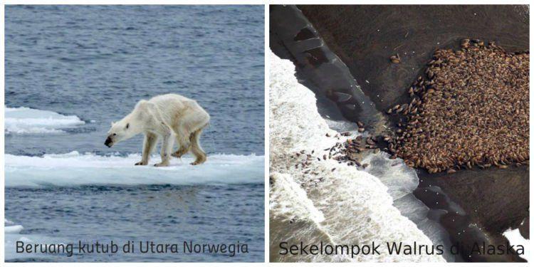 Hewan-hewan ini terancam kehilangan habitatnya