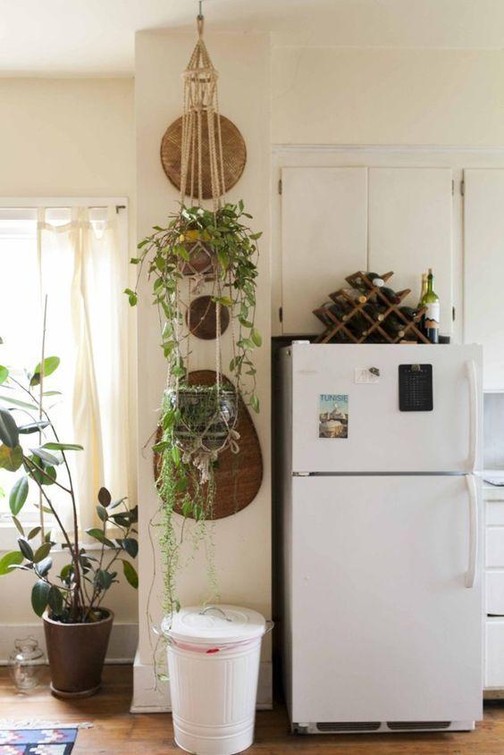 Sebelah kulkas ada tanamannya