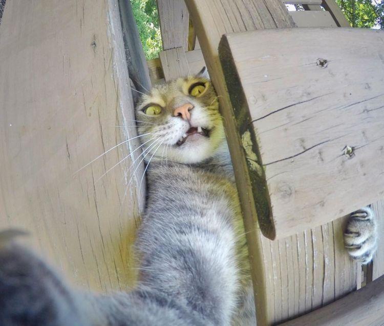 Download 93+  Gambar Kucing Yg Keren Lucu HD