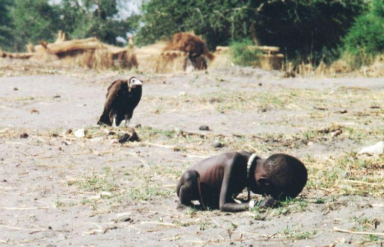 balita vs burung pemakan bangkai