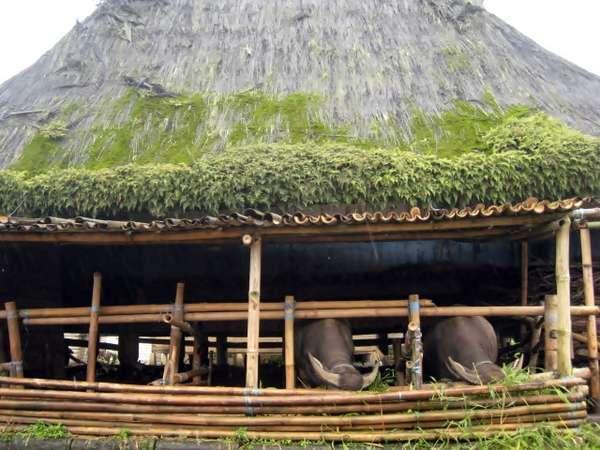 Desa adat suku