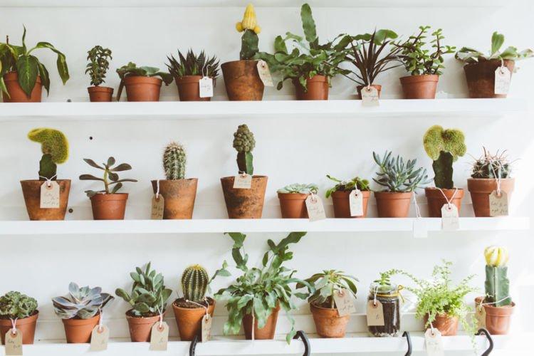 toko tanaman
