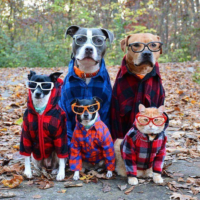 Foto Pertama Asik Banget Siha Para Anjing Lucu Ini Pakai Kemeja Flanel Dan Kacamata Kaya Personel Grup Band Nggak Sih