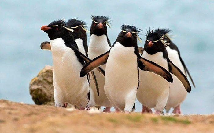 penguin banyak gaya