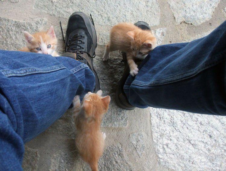ayo main!