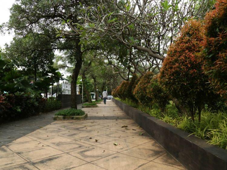 trotoar juga jadi tempat pepohonan kota