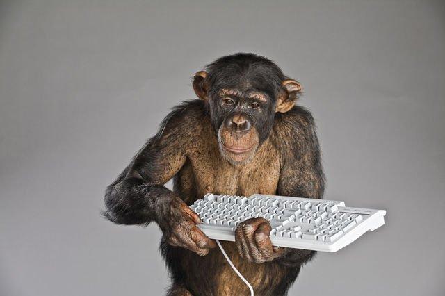 Monyet memegang keyboard