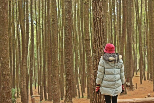 Wisata Hutan Pinus Dlingo