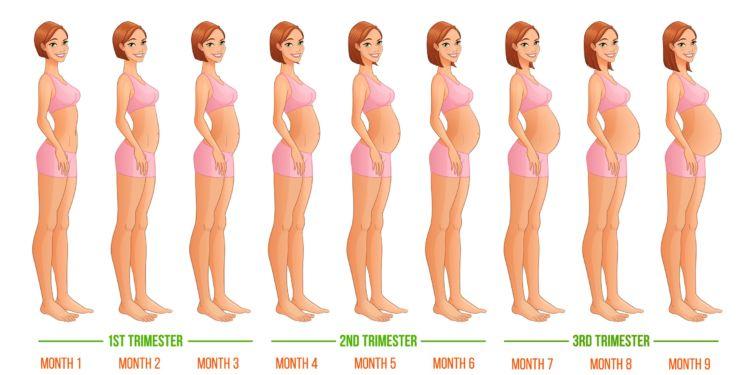 20 Istilah Seputar Kehamilan Yang Perlu Diketahui Biar Nggak Bingung Baca Hasil Konsultasi