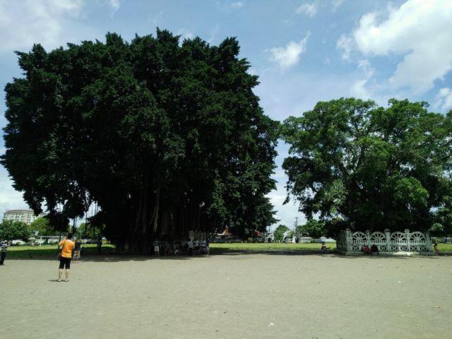 Dua Pohon Fenomenal