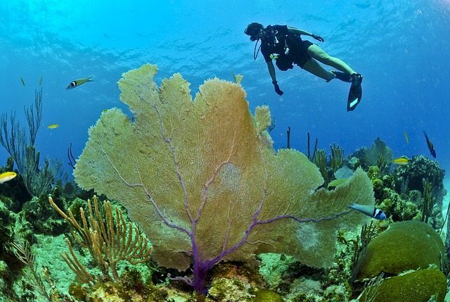Pengamatan bawah Laut, Enak lho!
