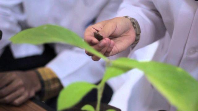 Mengenal lebih jauh tantang Tumbuhan deh