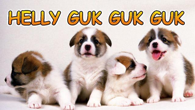 Anjing Kecil | helly guk guk guk | lagu anak indonesia | Hewan Lucu | cute puppies