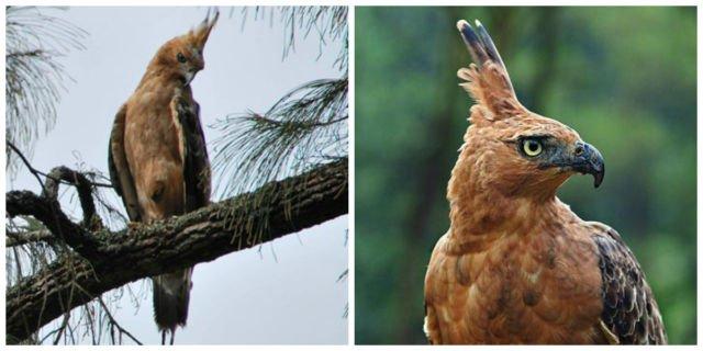 Terkenal Sebagai Lambang Negara Simbol Pancasila 5 Fakta Burung Garuda Ini Banyak Yang Belum Tahu